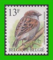 BUZIN - 2533** Moineau Domestique / Huismus - Papier FLUO - 1985-.. Birds (Buzin)