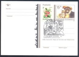 Austria östrreich 1999 Postal Stationery Card: Fauna Cat Chat Katze Hund Dog Chien: Bycicle Butterfly Sammler Treffen - Domestic Cats