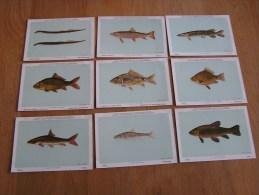 9 Cartes POISSONS D' EAU DOUCE DE BELGIQUE  Institut Royal Des Sciences Naturelles De Belgique Pêche Poisson - Cartes Postales