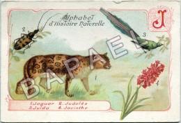 Image - Alphabet D'Histoire Naturelle - Le ''J'' (Recto-Verso) - Autres