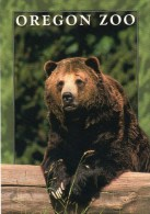 Postcard - Grizzly Bear At Oregon Zoo. CPC-3184 - Bears