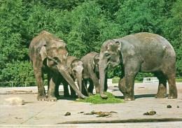 Postcard - Elephants At Aalborg Zoo. 13473-6 - Elephants