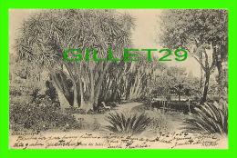 ALGER, ALGÉRIE - YUCCA DES INDES - CIRCULÉE EN 1906 - ND PHOT - - Alger