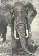 Kenia Nairobi Hilton / Hors Format - Éléphants