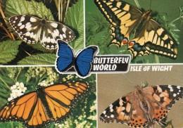 Postcard - Butterfly World, Isle Of Wight. L6/SP.9654 - Birds