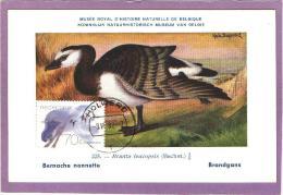 Carte Maximum - Oiseaux - Pays-Bas - Bernache - 1982 - Oies