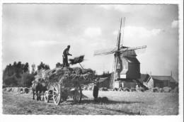 Wormhoudt (59) - Moulin Deschodt. Bon état, A Circulé. - Autres Communes
