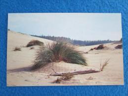 Sand Dunes. Oregon Coast. - Non Classés