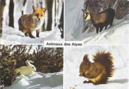 CARTE POSTALE -  FAUNE DE MONTAGNE - Animals