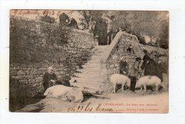 Jan15  4467710    Guérande   La Foire Aux Cochons - Guérande