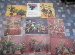 Fiches De Plantes Vertes Horticulture Et Pépinieres  National , Plantes Interieurs - Sammelkarten, Lernkarten