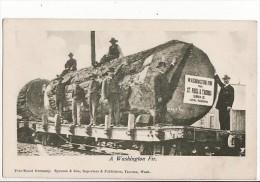 A Washington Fir From St Paul & Tacoma Lumber Co / Train Bucheron, Travail Du Bois/ - Tacoma