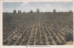 COLORADO, 1900-1910's; Northern Colorado Sugar Beet Field - United States