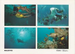 MALDIVES           MICHAEL FRIEDEL        (NUOVA) - Maldive