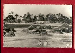 DAF-01  Campement De Nomades Dans Le Désert. Palmeraie. Non Circulé - Cartes Postales