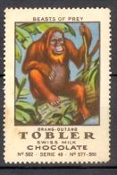Vignette Image Chromo Chocolat Tobler Swiss Milk Chocolate Orang Outang - Chocolat