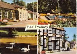 BG1594 Bad Driburg Cygne Swan   CPSM 14x9.5cm  Germany - Bad Driburg