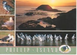 PHILLIP  ISLAND    SUNSET  OVER  THE  NOBBIES       (NUOVA)  MAXI CARD - Australia