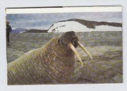 Greenland WALRUS POLAR BEAR PHOTO LETTER - Vita Acquatica