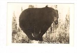 ALASKA  BLACK  BEAR   -   OURS - - Etats-Unis