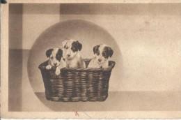 CANI.CUCCIOLI NELLA CESTA.   -NO -VIAGGIATA-- 1935..FP.T1299 - Cani