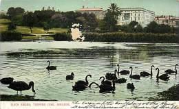 ADELAIDE. CIGNI NERI NEL TORRENS LAKE . CARTOLINA PRIMI DECENNI DEL '900 - Adelaide