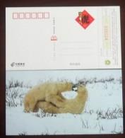 Polarbär  \Polar Bear    A1 - Ours