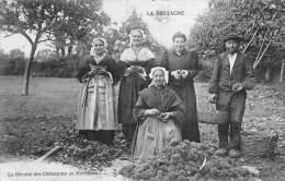Morbihan     56    La Récolte Des Châtaignes   (Petits Défaults  Voir Scan) - France