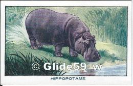 Chromo - Bon-Point - Les Mammifères - L'Hippopotame - Anémie - Débilité - Faiblesse - Sirop Deschiens - N° 57 - Autres