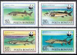 ROMANIA, 1994, Fish, World Wildlife Fund, W.W.F., WWF, Vasarhelyi, MNH (**), LPMP/Sc 1359/3954-57 - W.W.F.