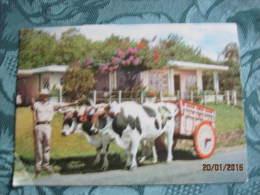 Costa Rica Carreta Con Bueyes - Costa Rica