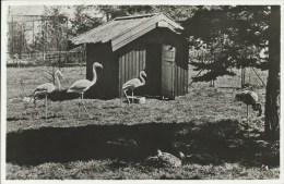 NL125 Dierenpark Klant´s Dierentuin Valkenburg, Zoo - Pays-Bas