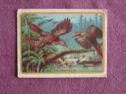 ARCHEOPTERYX  Oiseaux  Animal Animaux Chromo Librairie D´éducation Nationale Educatif Trading Card Chromos Vignette - Chromos