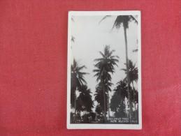 Papua New Guinea Cocanut Trees        -------Reference 1684 - Papua New Guinea