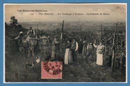 64 - Juran�on --  Les Vendanges - La Cueillette du raisin