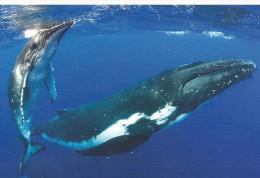 Carte Postale : La Baleine. (Voir Commentaires) - Fische Und Schaltiere