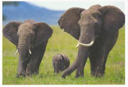 Carte Postale : L´éléphant. (Voir Commentaires) - Elefanten