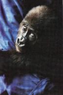 Postcard - Western Lowland Gorilla (Nona) At Wish On Gouger. #12201 - Monkeys