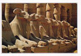 1 AK  Ägypten * Sphinx-Allee Am Tempel Des Amun In Karnak * - Luxor