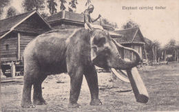 ELEPHANT CARRYING TIMBER - Elephants