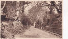 EAST GRINSTEAD - BLACKWELL HOLLOW - Surrey