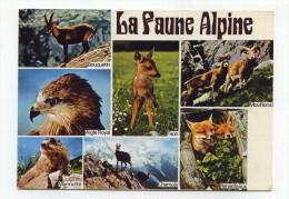 CP , La FAUNE ALPINE - Tierwelt & Fauna