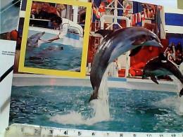 DELFINO  DOLPHINS GRDALAND CASTELNUOVO DEL GARDA  FLORIDA DOLPHIN  SHOW  VB1984 EQ13170 - Dauphins