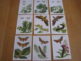 9 Cartes INSECTES DE BELGIQUE 28 à 35 Papillons Nole Sphynx Institut Royal Des Sciences Naturelles Belgique - Zonder Classificatie