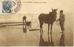 252 La Panne Pêcheurs De Crevettes. - De Panne