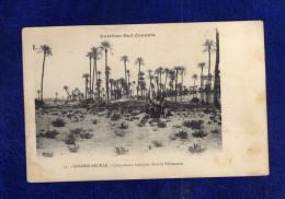 Algerien / Algérie     COLOMB-BECHAR - Campement Indigène Dans La Palmeraie - Bechar (Colomb Béchar)