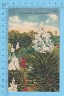 Plante , Plant ( Yucca Blossoms Or Spanish Bayonet Cir: 1950-60 ) Recto/Verso - Fleurs, Plantes & Arbres