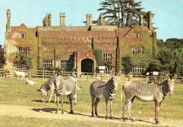 Postcard - Grevy Zebra & Scimitar Horned Oryx At Marwell Zoological Park. A - Zebras