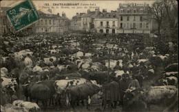 44 - CHATEAUBRIANT - Marché Aux Bestiaux - Vaches - Châteaubriant