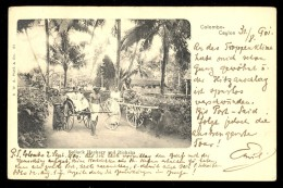 Colombo-Ceylon. Bullock Hackery And Ricksha / Year 1901 / Old Postcard Circulated - Sri Lanka (Ceylon)